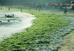 An Algae Bloom is coming Pakistan's way and it is not good